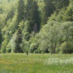 Biodiversitaet - 11