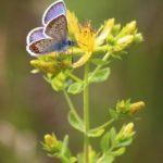 Biodiversitaet - 23
