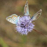 Biodiversitaet - 25