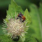 Biodiversitaet - 32