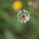 Biodiversitaet - 33