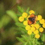Biodiversitaet - 37