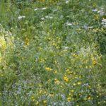 Biodiversitaet - 4