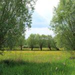 Biodiversitaet - 43