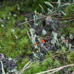 Biodiversitaet - 5