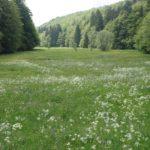 Biodiversitaet - 9