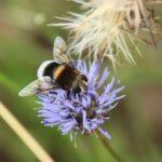 Schmetterlinge-Wiese - 23
