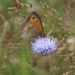 Schmetterlinge-Wiese - 24