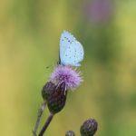 Schmetterlinge-Wiese - 30