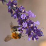 Schmetterlinge-Wiese - 35