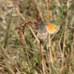 Schmetterlinge-Wiese - 4