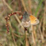 Schmetterlinge-Wiese - 5