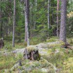 schweden-110